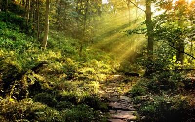 Listen Now –  Unafraid of the Wilderness – Luke 4:1-2